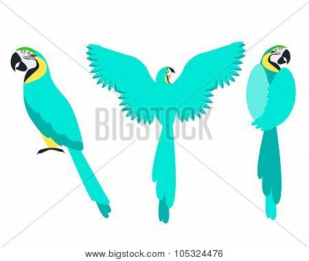 Set of blue parrot isolated on a white background. Vector illustration