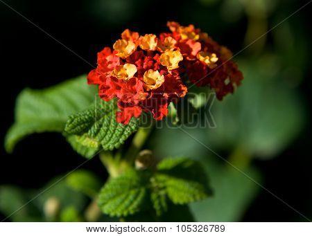 Maltese flora, maltese flower, maltese nature