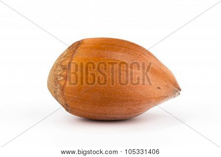 Hazel Nut, Closeup