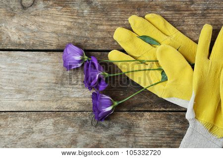 Yellow garden gloves and violet flower on wooden background