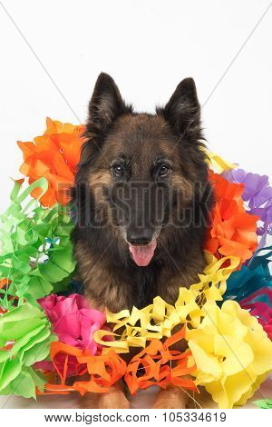 Dog With Garlands