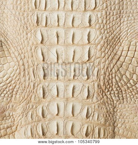 Golden crocodile skin texture