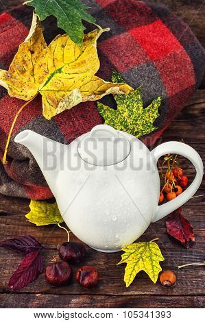 Still life late autumn