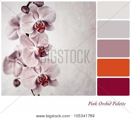 A vintage effect, delicate pink orchid with complimentary colour palette