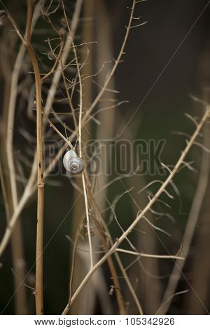 Snails on the stem. The composition of dry branches