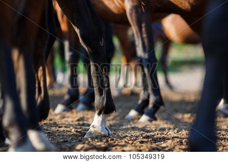 Legs Of The Horses