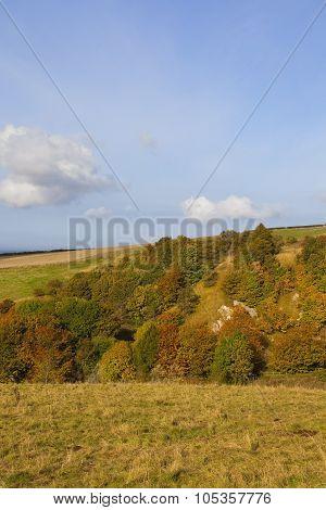Autumnal Hillside