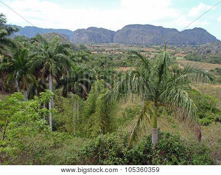 Valley Of Vinales