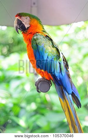 Parrot in Miami in beautiful colors