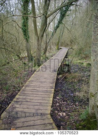 Wooden boardwalk in woodland