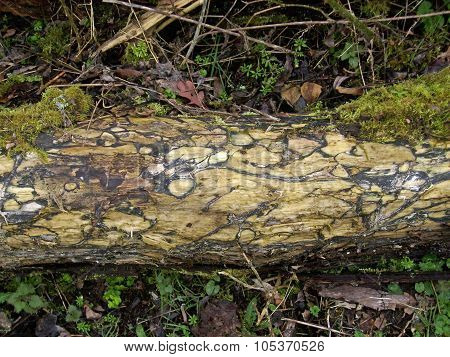 Rotting log in woodland