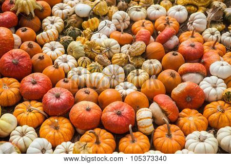 Pile of pumpkins. Background for the autumn season and Halloween