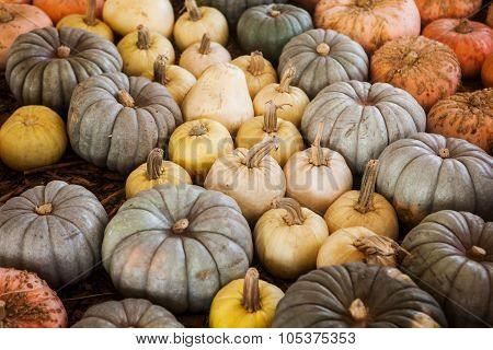 Assortment of colorful pumpkins. A great autumnal halloween background.
