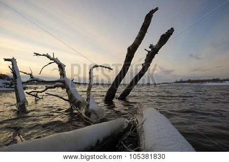 Logs sticking out of the water at sunset.