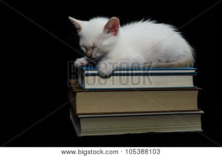 White Young Baby Cat