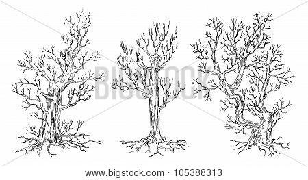 Set of hand drawn trees