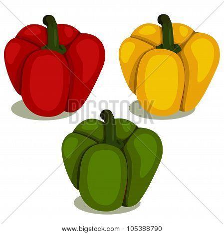 Illustrator of Bell pepper