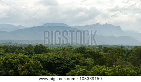 Tropical Jungle In A Hilly Landscape