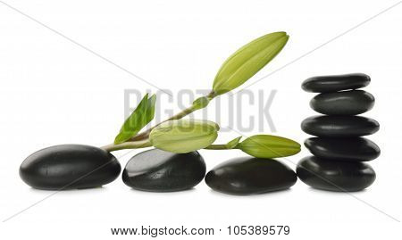 Massage Stones And Lily Bud