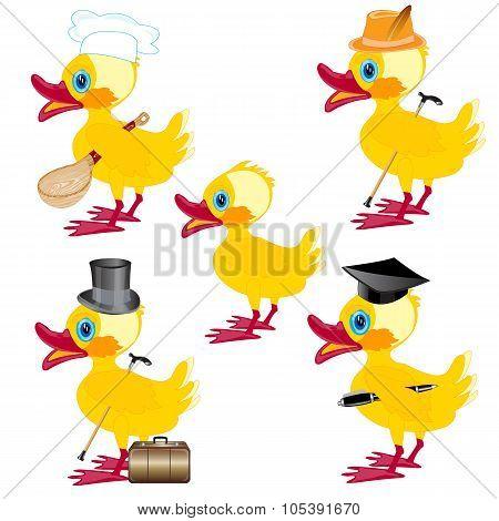 Cartoons on duck