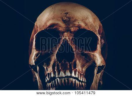 Creepy Old Skull On Black Background