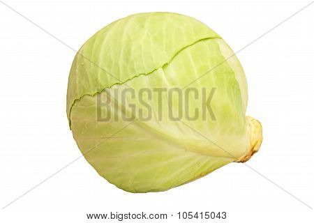 Green Ripe Cabbage Isolated On White.