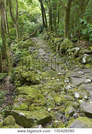 Rocky Pathway In A Wet Subtropical Green Forest. Azores, Portugal
