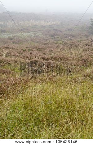 Amrum (germany) - Heathland At Fog