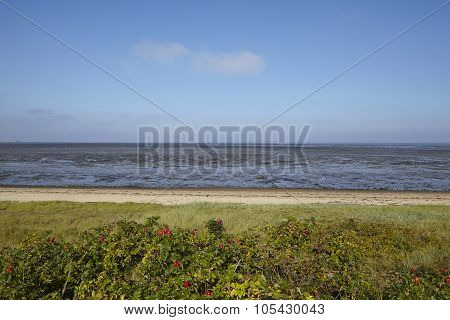 Amrum (germany) - Mudflat