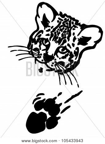 Leopard puma or jaguar face with print of paw