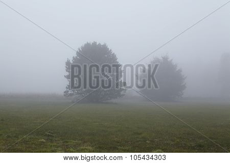 Amrum (germany) - Two Trees At Fog