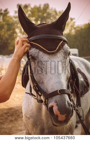 Horse before ride.