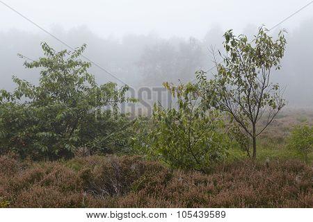 Amrum (germany) - Landscape At Fog