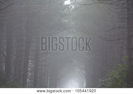Amrum (germany) - Forest At Fog