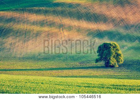 Vintage retro effect filtered hipster style image of Lonely tree in rolling fields landscape of Moravia, Czech Republic