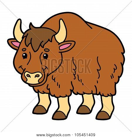 Cute animal yak.