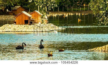 Landscape With Duckhouse