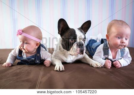 Baby twins and french bulldog on the couch