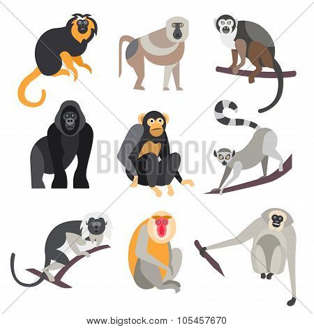 Set of Apes and Monkeys. Vector Illustration