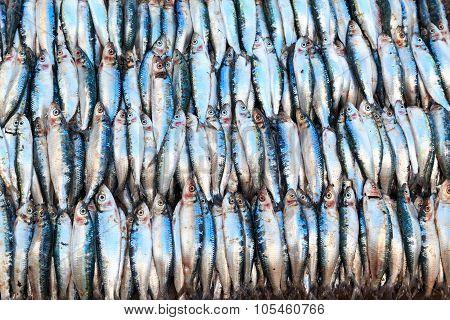 Fresh Fish Displayed On A Market Stall