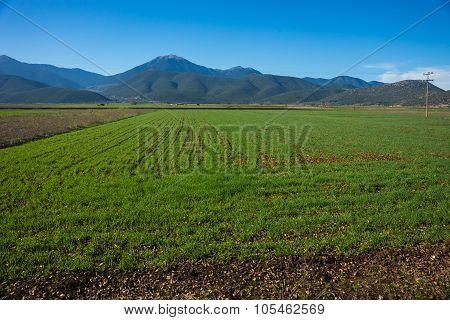 Green Plains And Mountains Around Vitina, Peloponnese, Greece