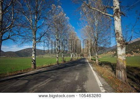Landscape With Birches About Showcases, Peloponnese, Greece