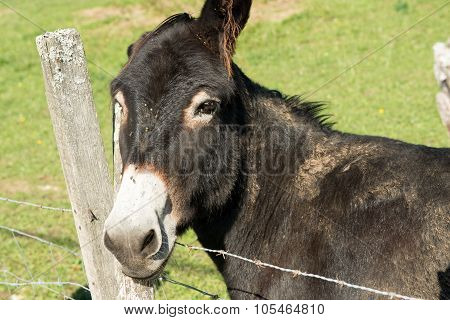 brown donkey resting his head on a fence