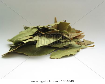 Bay Leaves Pile