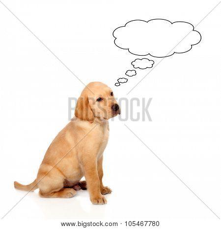 Pensive little Golden Retriever dog breed in isolated studio on white background