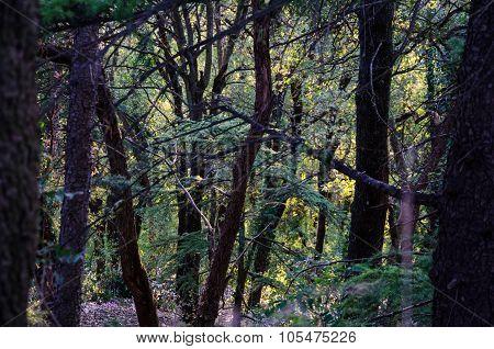 A wood in San Marino, Rimini. Emilia-Romagna. Italy.