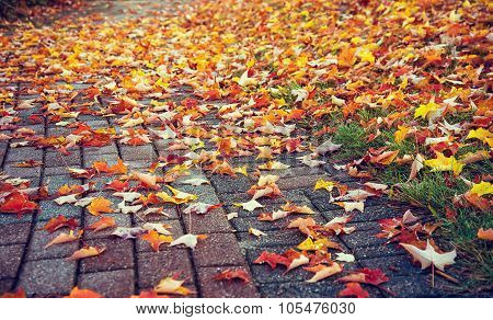 Walkway Covered With Colorful Autumn Leaves