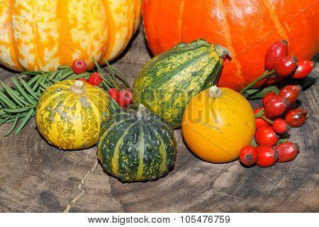 Autumn Decoration, Pumpkin, Gourd, Rose Hips, Berries