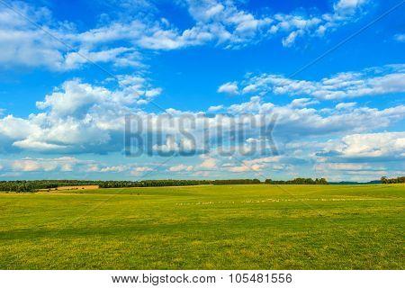 English Countryside Meadow