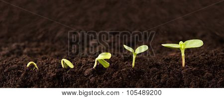 Growing Plant Sequence In Dirt